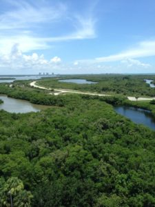 Aerial view of mangroves and water